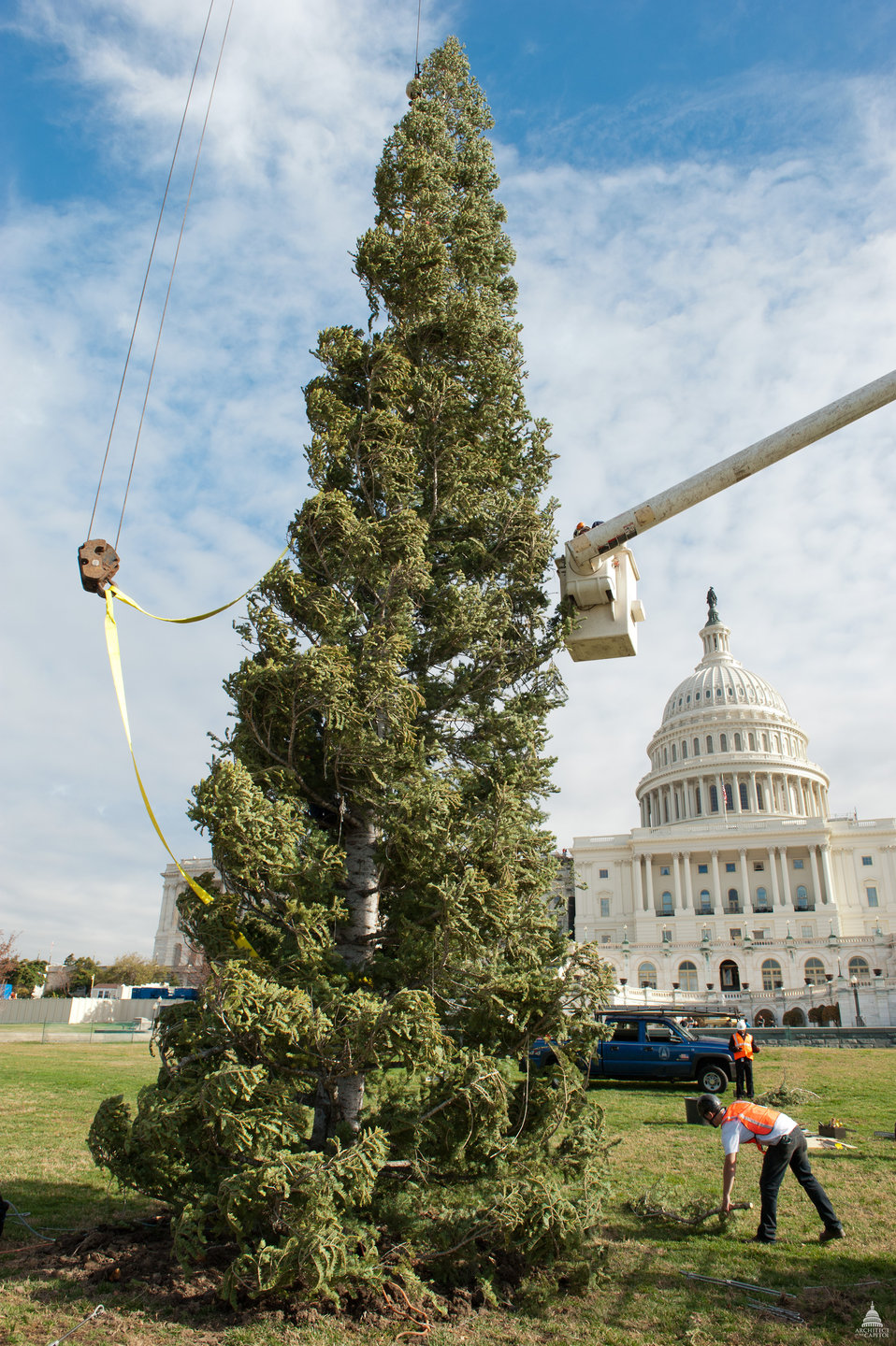 Capitol Christmas Tree 2011