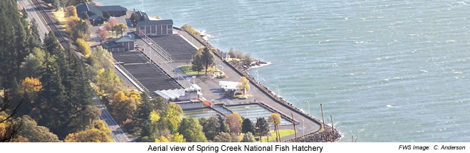 Aerial view of Spring Creek NFH