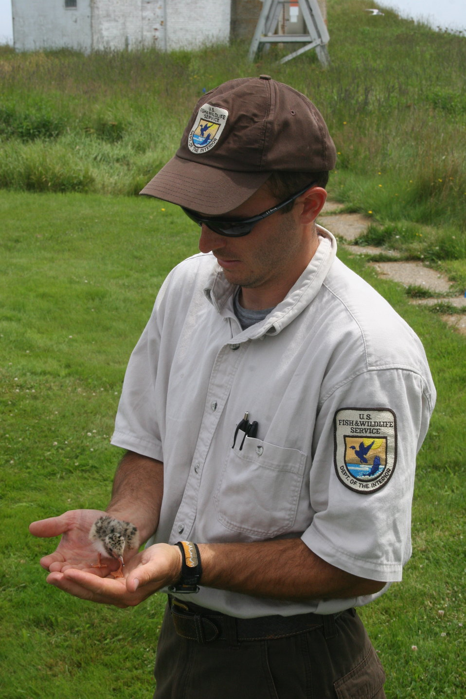 FWS Worker Holding Tern Chick