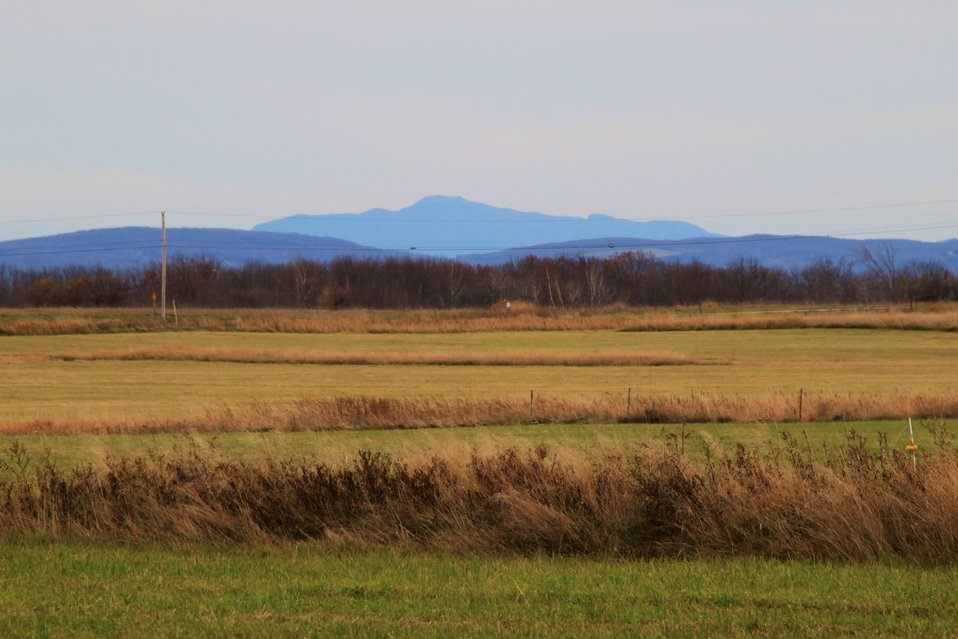 Mount Mansfield and Missisquoi National Wildlife Refuge grassland