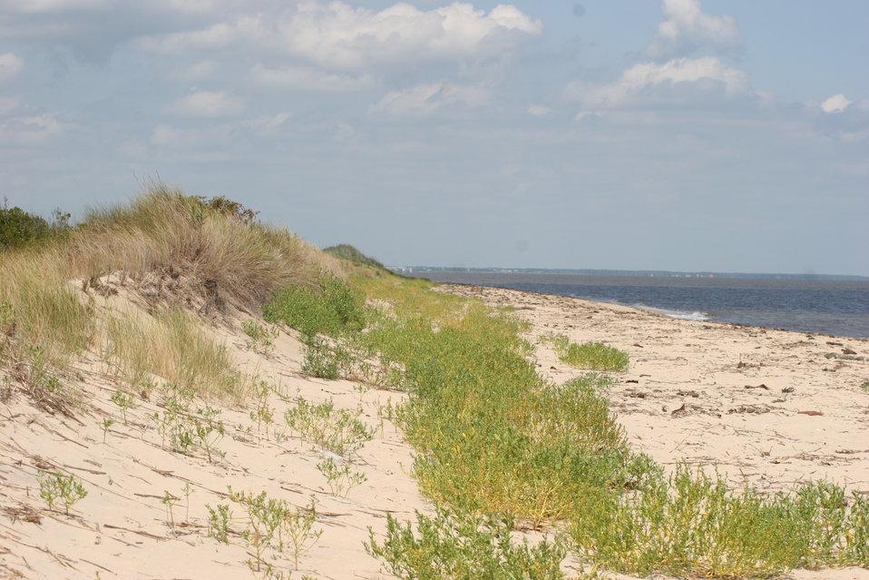 Dunes at Prime Hook NWR