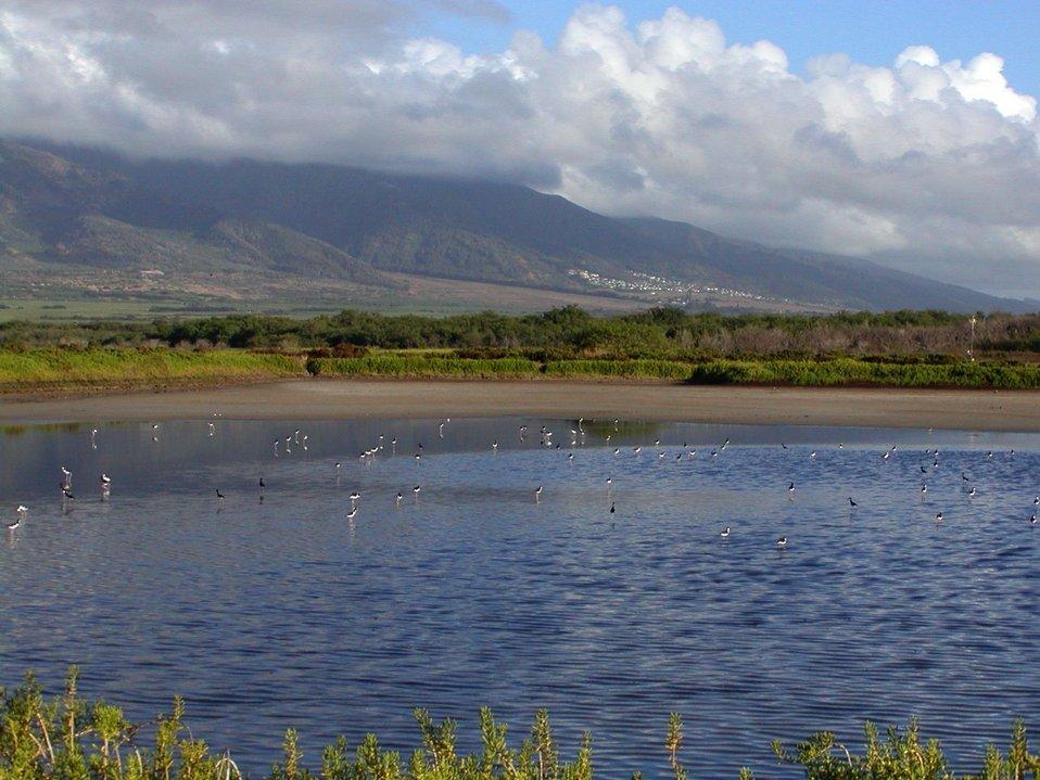 Kanuimanu Ponds Trail