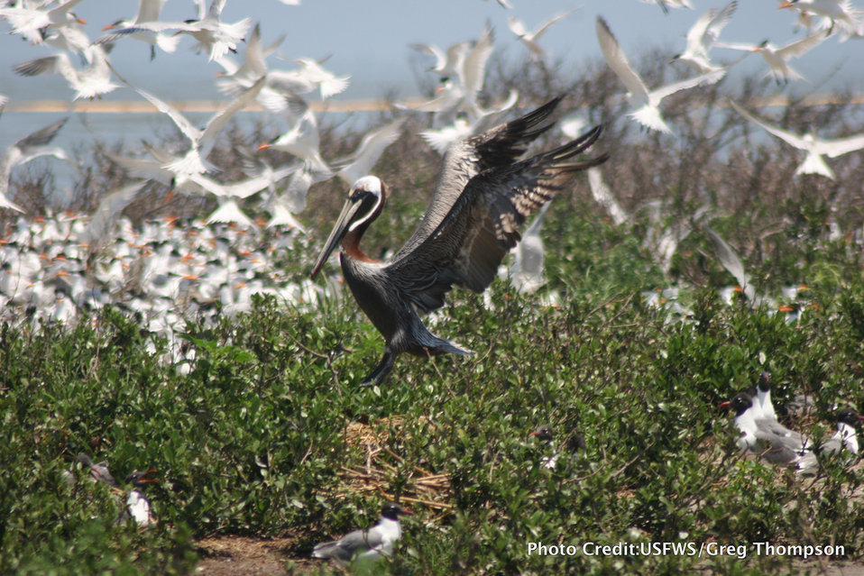 Breton National Wildlife Refuge, LA