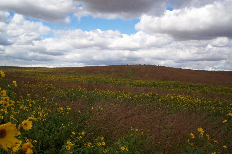 Prairie vista, Neal Smith Refuge