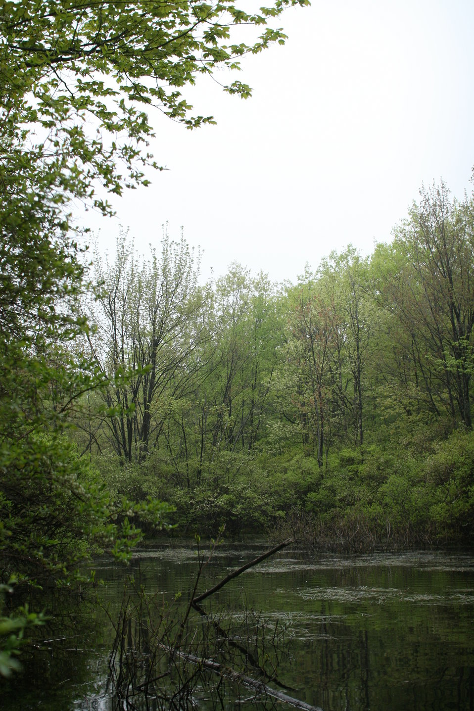 Blanding's turtle habitat at New Boston Air Force Base