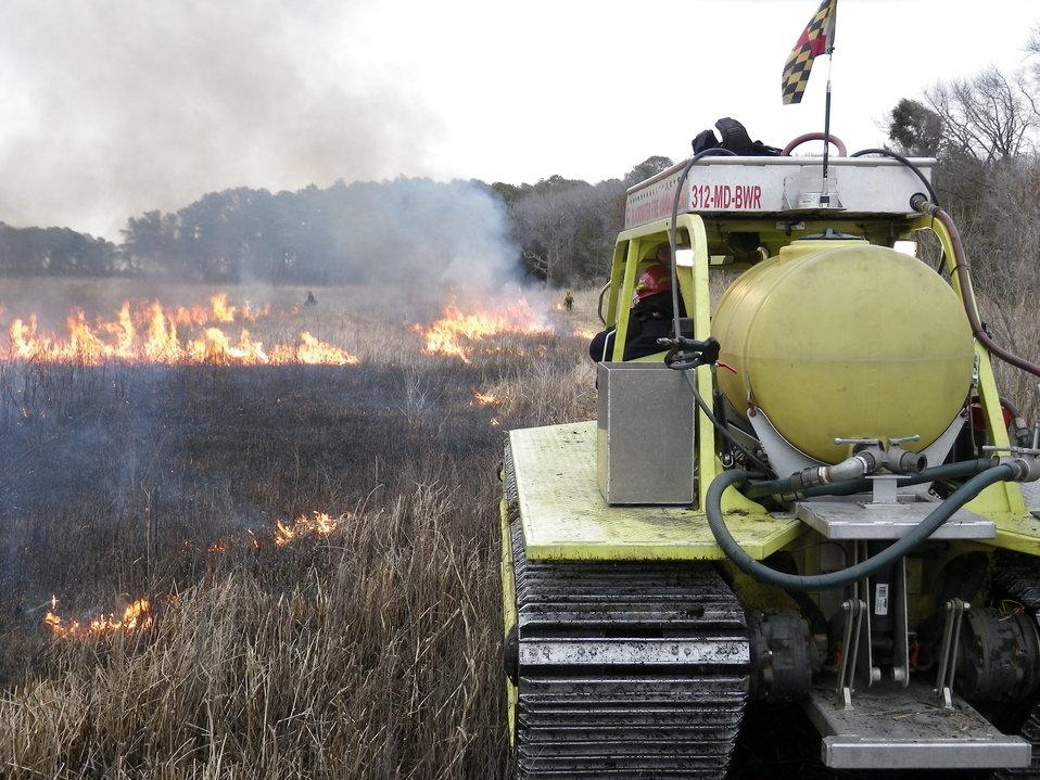 Marshmaster at Maryland Wildlife Refuge