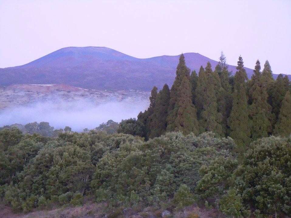 Mauna Kea from Hakalau