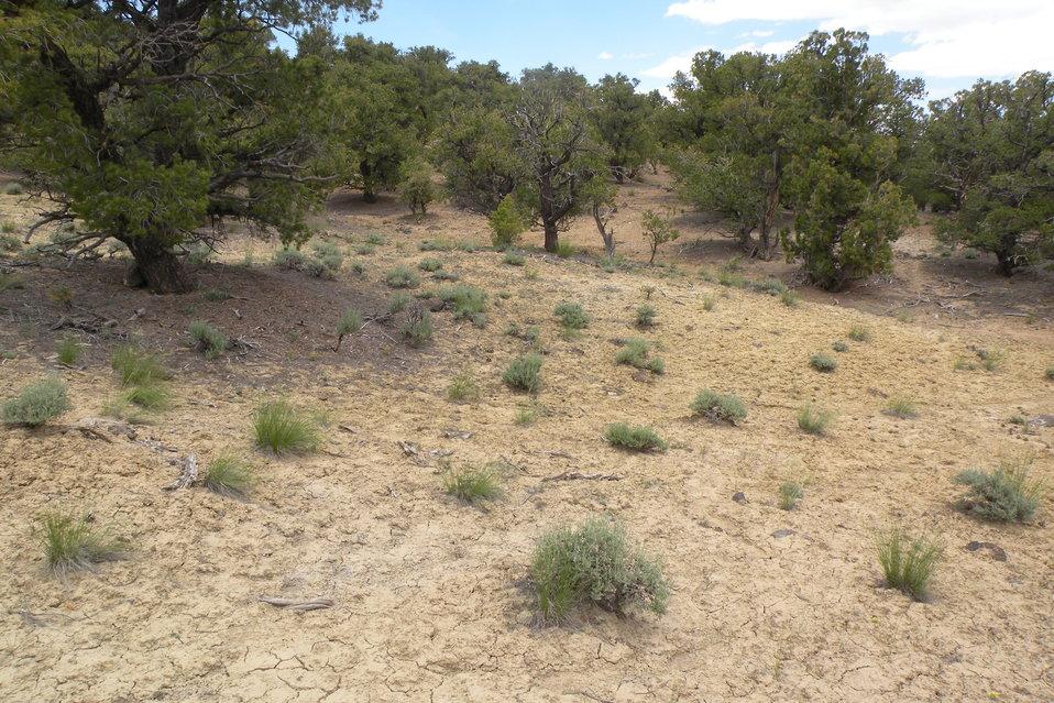 Last Chance Townsendia (Townsendia aprica)  Habitat