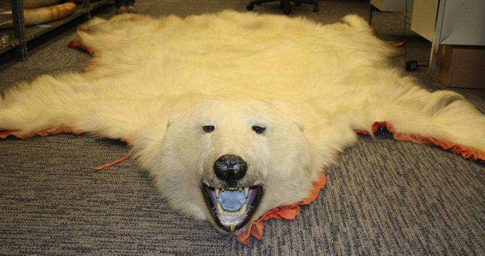 Polar bear skin seized in N.J.