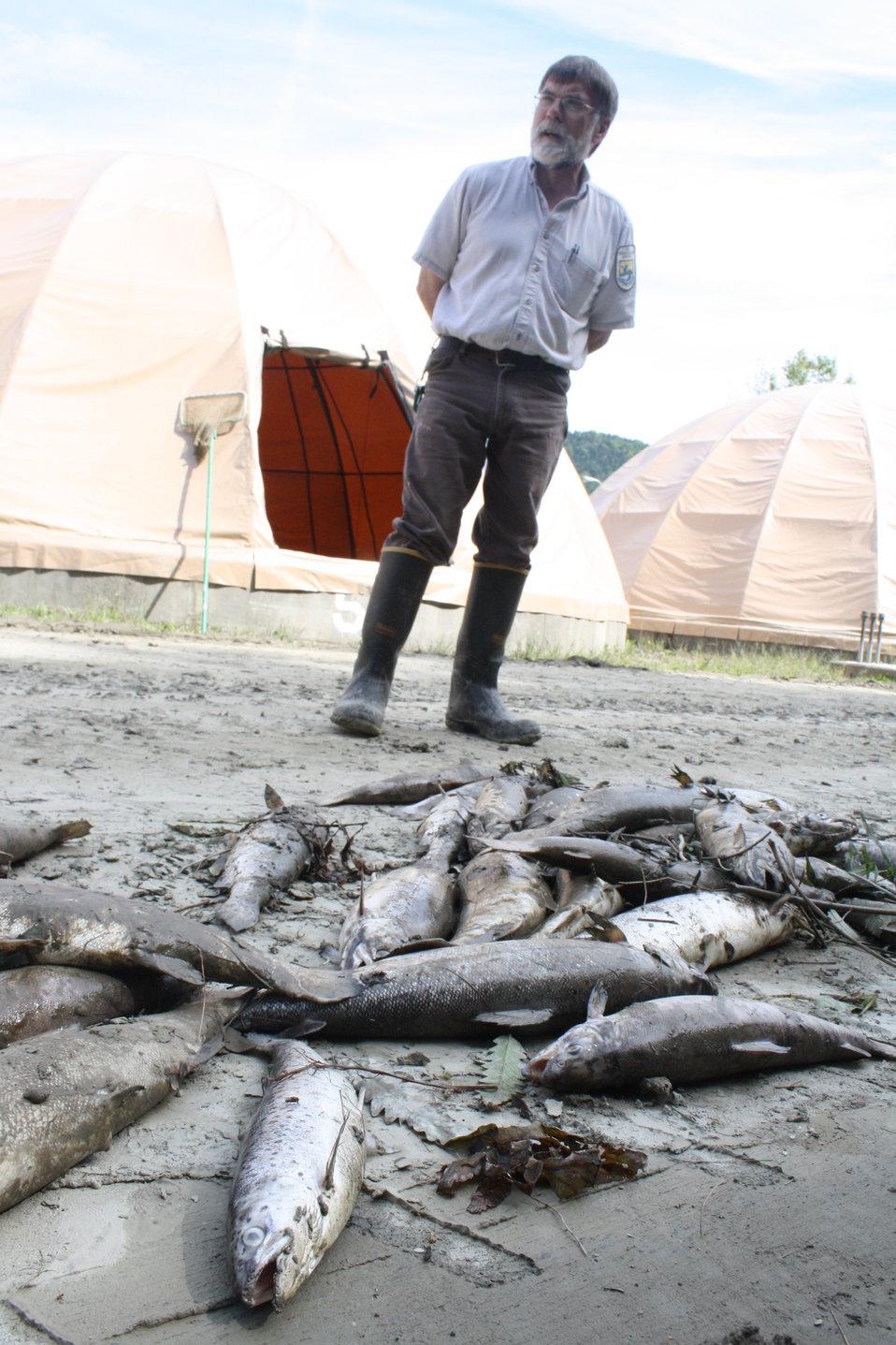 Dead fish, sediment after Hurricane Irene flood event