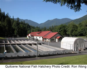 Quilcene National Fish Hatchery