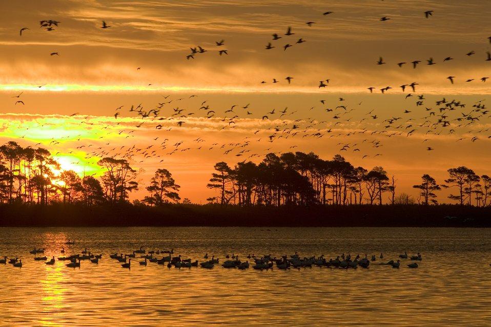 Photo of the Week - Sunrise at Chincoteague National Wildlife Refuge (VA)