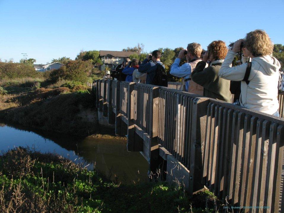 Tijuana Slough NWR birding