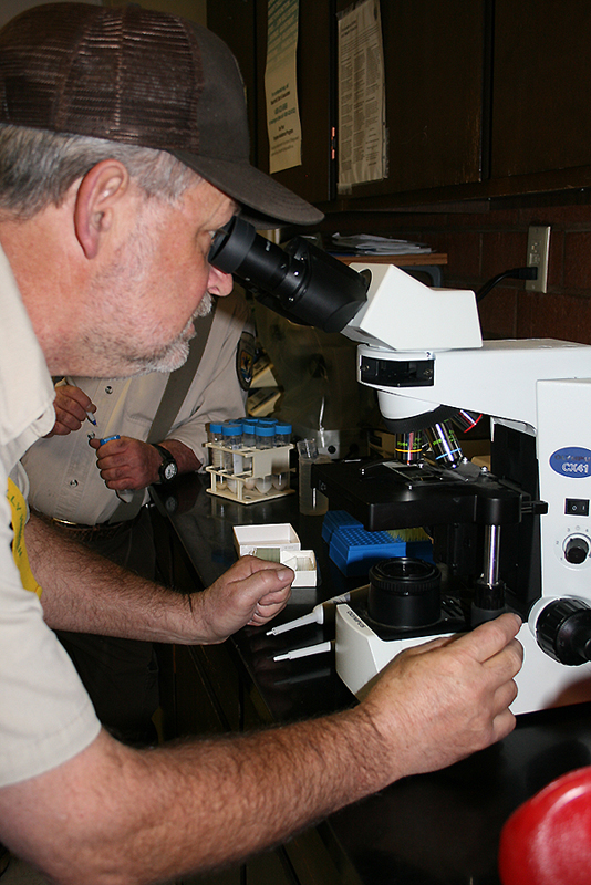 Fish Biologist analyzing milt count