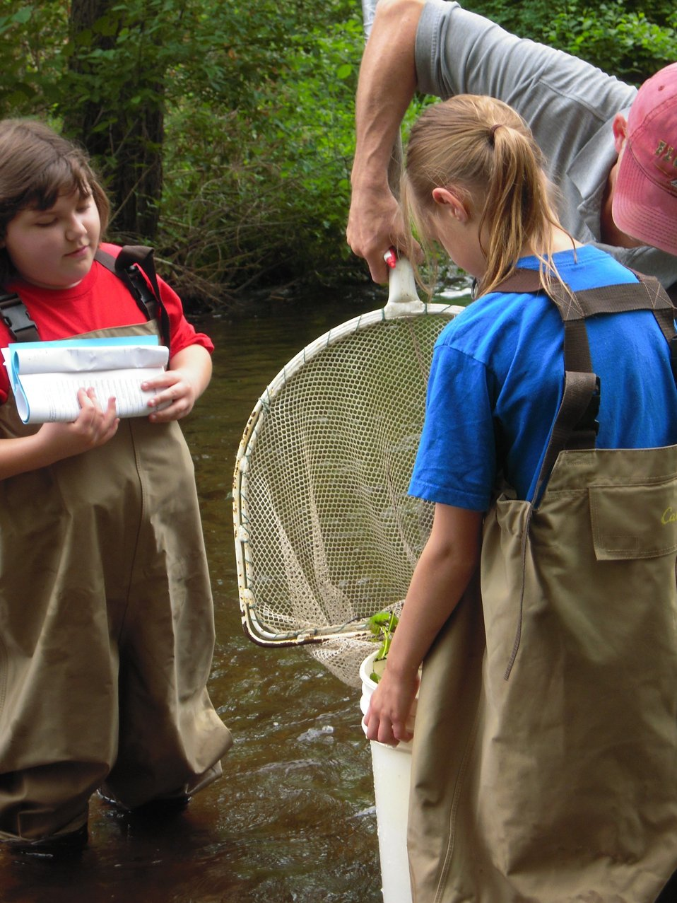 Checking nets for species