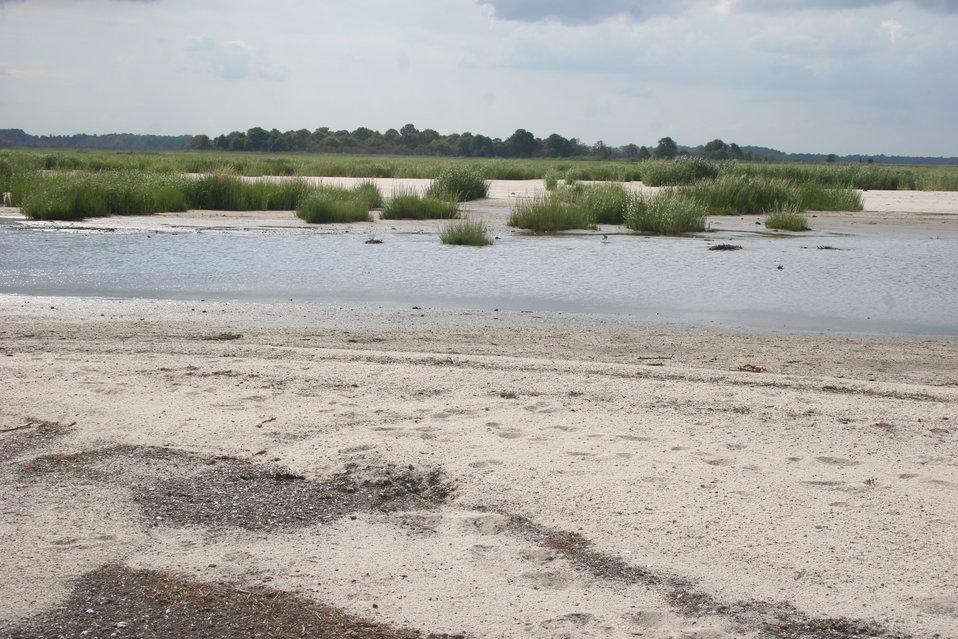 Salt Marsh at Prime Hook NWR