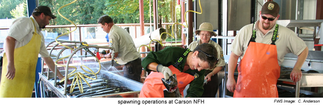 Spawning operations - Carson NFH