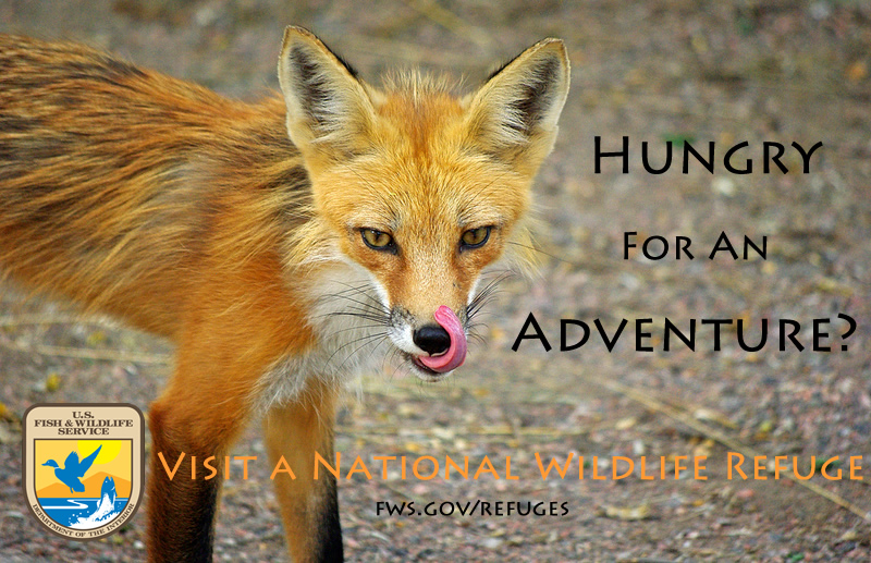 Hungry for an Adventure?