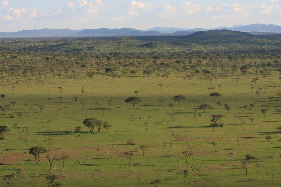 Rhino habitat