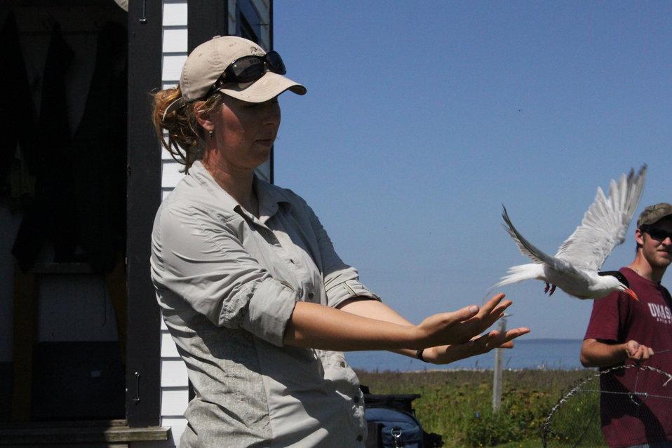 Setting Tern Free