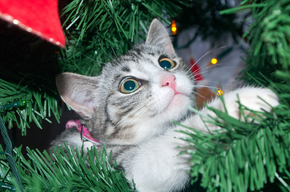 Cat on the tree 1