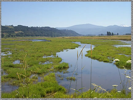 Wetlands - Steigerwald Lake NWR