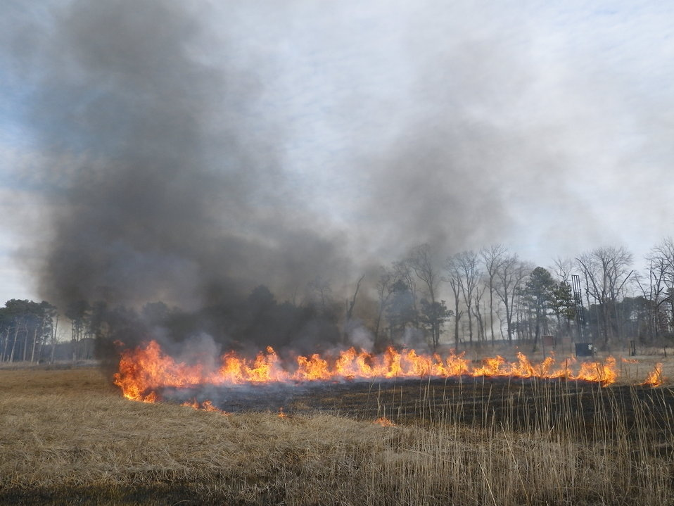 Eastern Neck National Wildlife Refuge controlled burn