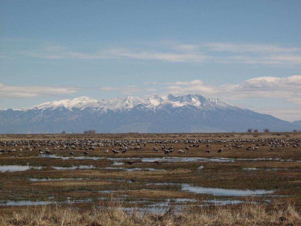 Monte Vista National Widllife Refuge Hosting Cranes