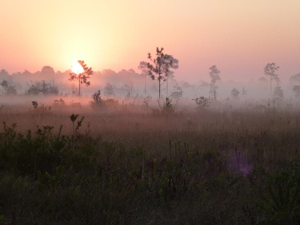 1st Mississippi sandhill crane nests found