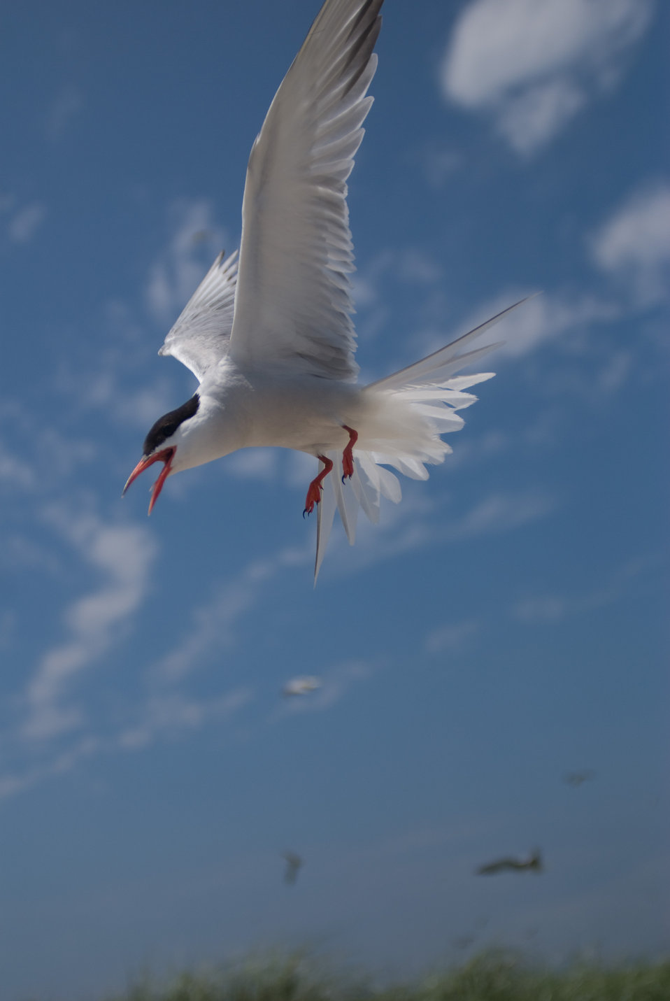 Photo of the Week - Tern at Monomoy National Wildlife Refuge, MA