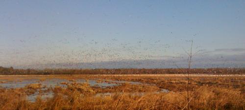 Birds at Grand Cote