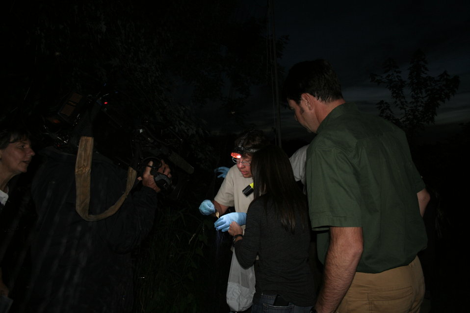CBS News filming bat capture