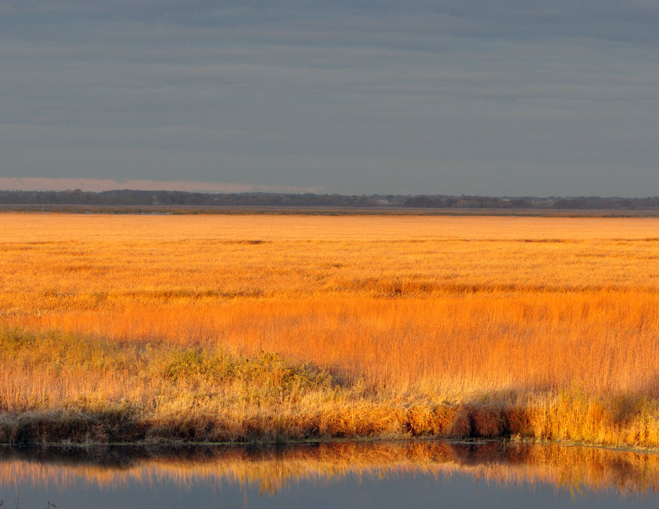 Marsh of Gold - Horicon National Wildlife Refuge