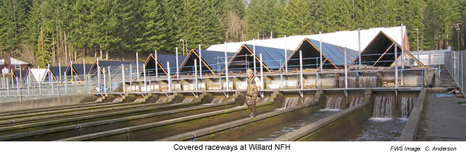 Covered Raceways - Willard National Fish Hatchery