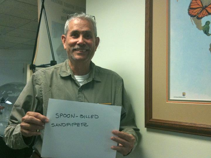 Gilberto Cintron, 'Spoon-Billed Sandpiper,' Credit: USFWS