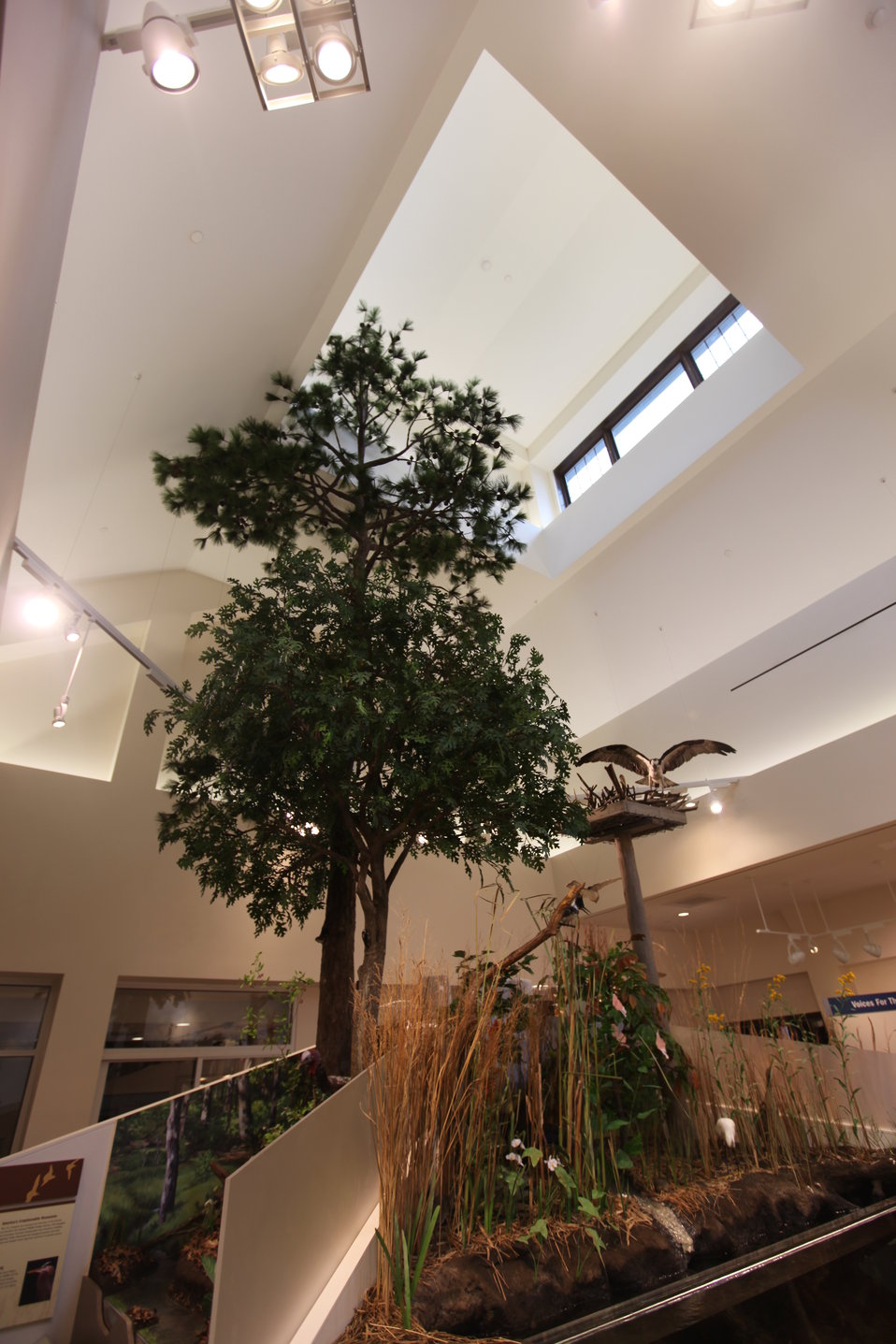 Tree exhibit