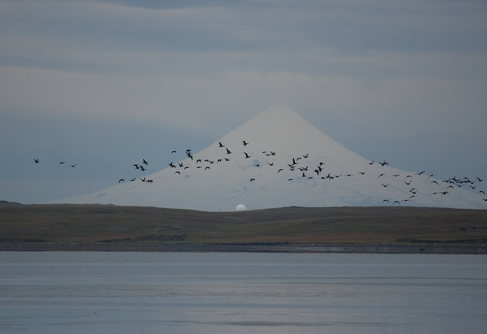 Brant and Shishaldin Volcano
