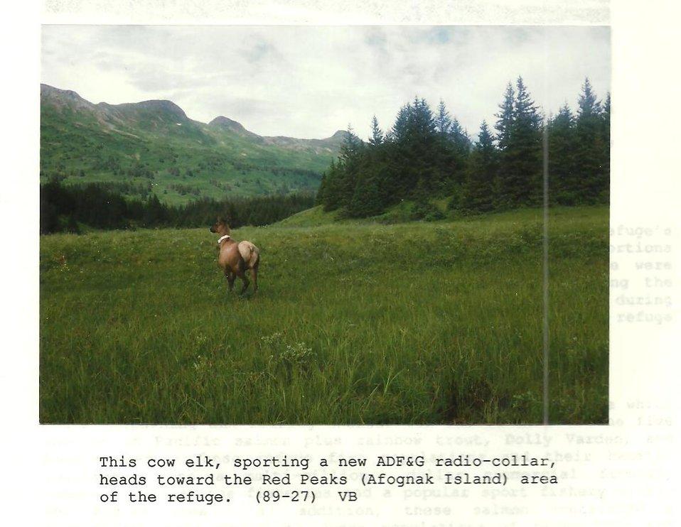 (1989) Collared Elk