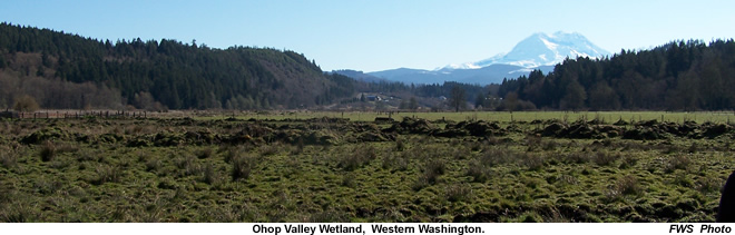 Ohop Valley wetland - Washington Fish and Wildlife Office