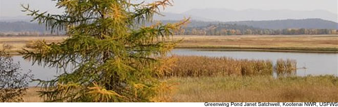 Greenwing Pond - Kootenai NWR