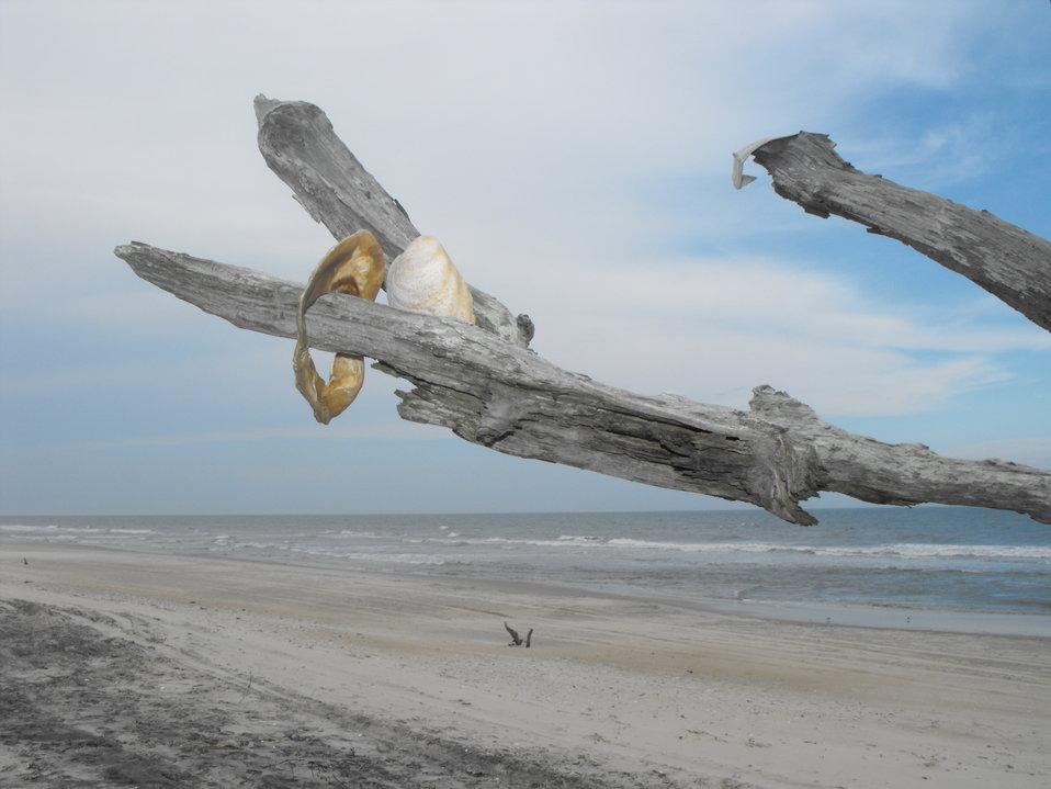 Shell Tree