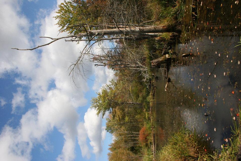Fall scene at Great Bay NWR