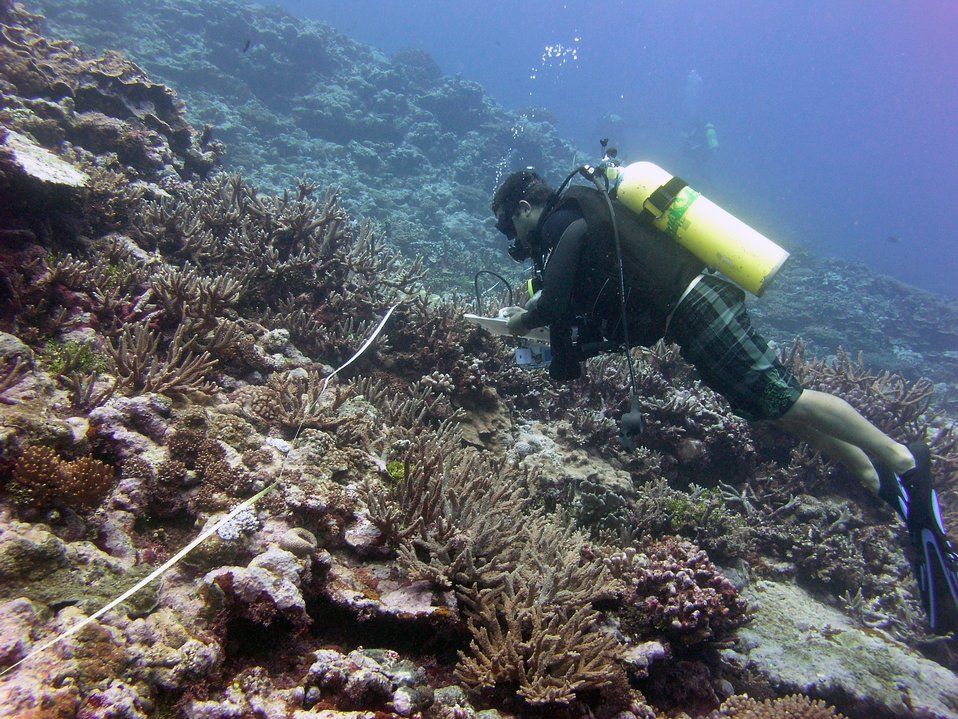 Scientific diver taking notes on reef transect