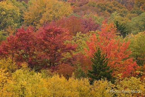 Fall Patchwork in Canaan Valley, West Virginia