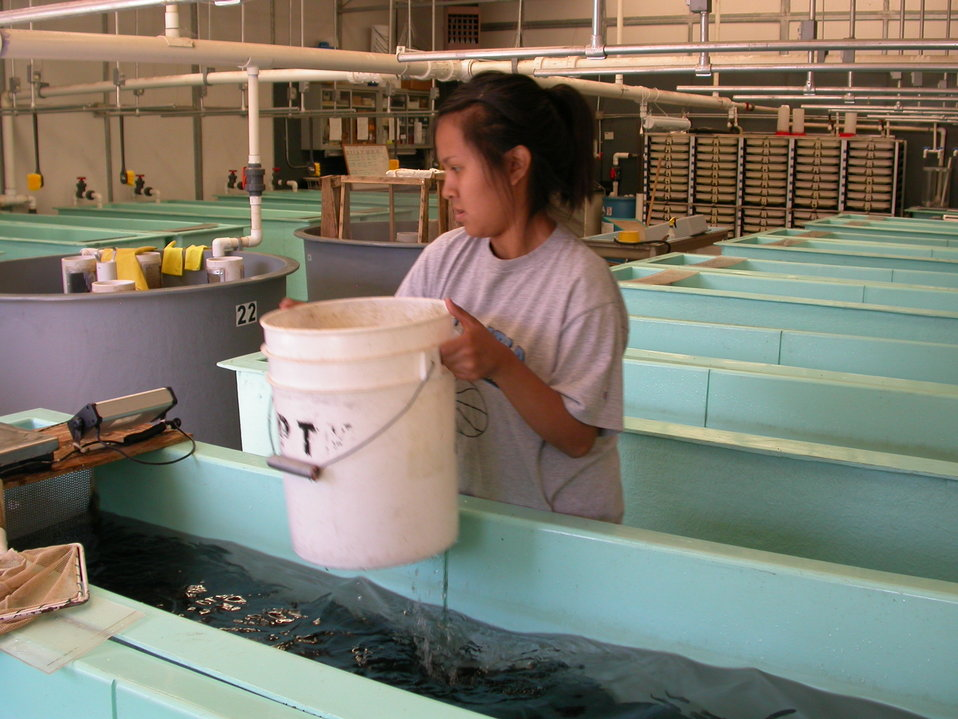 Working in a Fishery