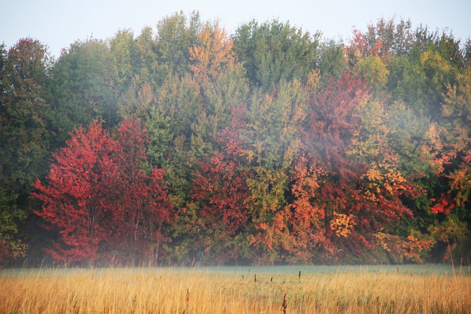 Missisquoi National Wildlife Refuge Foliage