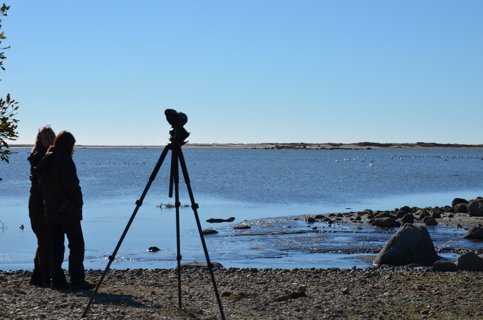 Documenting the transformation at Trustom Pond National Wildlife Refuge (RI)