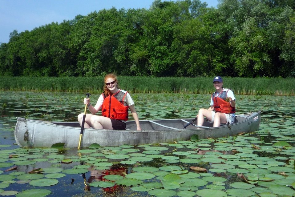 Pulling invasive species
