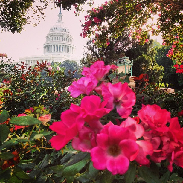 Happy Friday - enjoying summer blooms on Capitol Grounds. #landarch