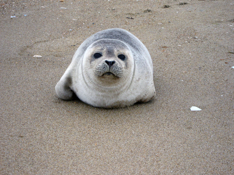 Photo of the Week - Seal pup at Back Bay National Wildlife Refuge, VA